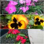 Fotor_145989067878039